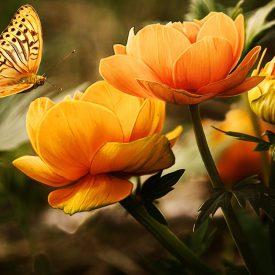 FBP-_FlowerButterfly